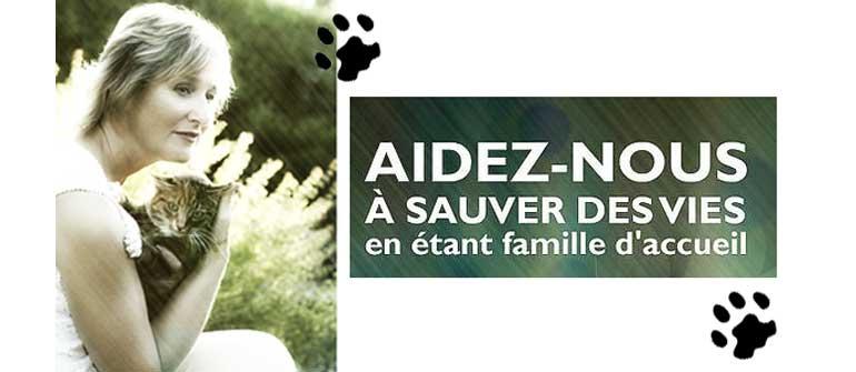 Adopter Un Chat Sur Toulouse Avec Le Chat Libre Du Mirail