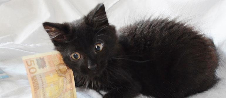 adopter un chat sur toulouse avec le chat libre du mirail. Black Bedroom Furniture Sets. Home Design Ideas